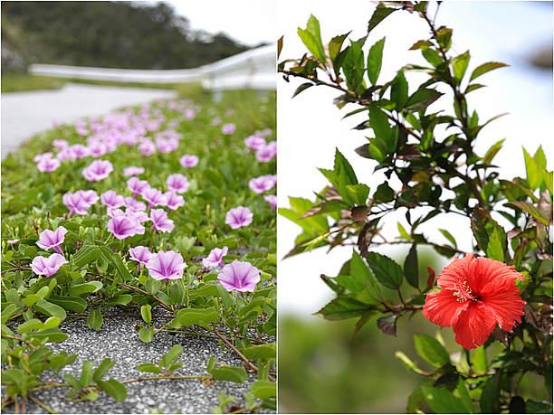 花びらを広げる季節の花々