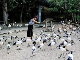 鳥たちにエサやり