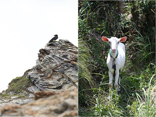 島に住まう動物たち