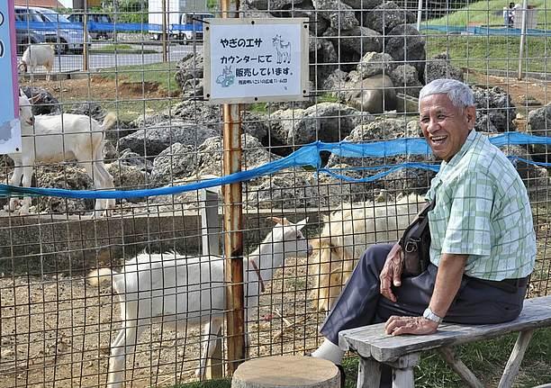 プチ動物園で飼育しているヒージャー(ヤギ)