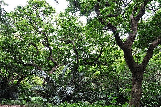 植物達が深い森を形成する