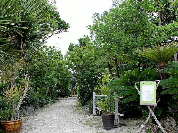 南国らしい植物と石畳の通路