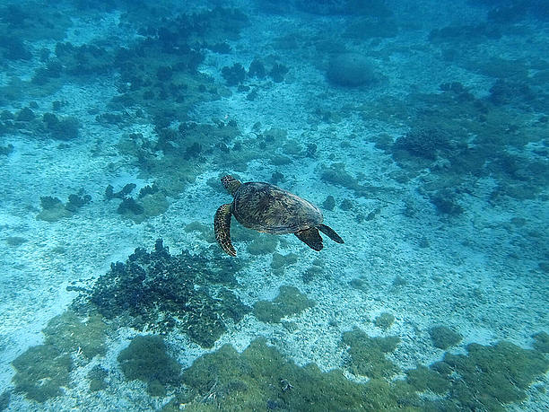 4つのヒレを使い、海の中を優雅に泳ぐうみがめ