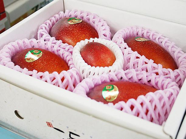 贈答用のマンゴー