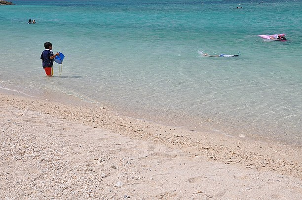 サヨリの稚魚が水面近くを泳