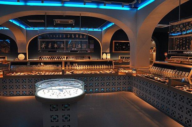 1万点以上の世界の貝を展示している シェルミュージアム
