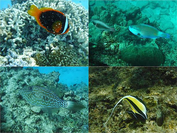 多彩な熱帯魚達