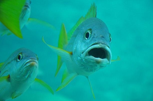 のぞき窓から見る魚