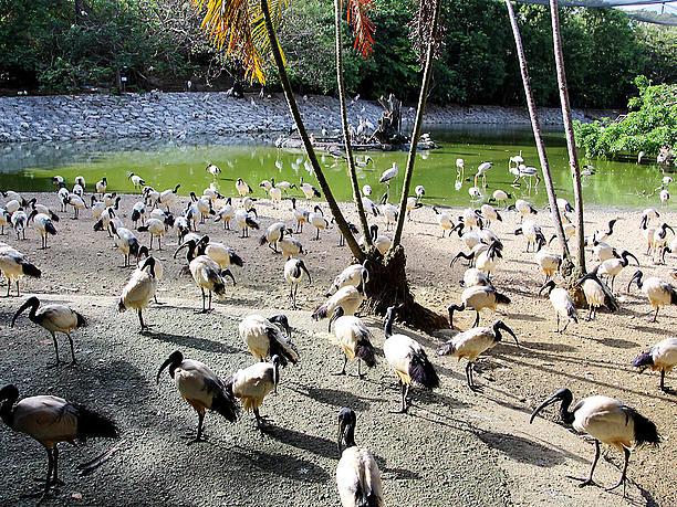 フラミンゴの湖