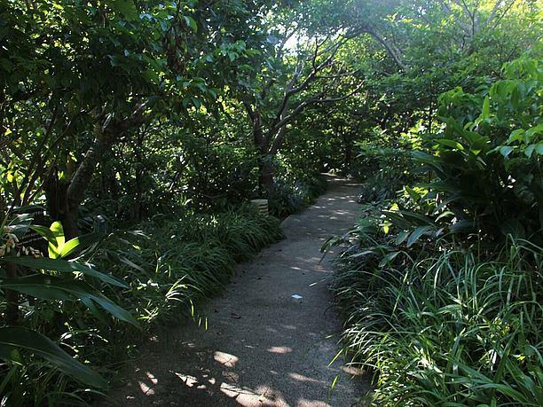 緑の香りが溢れる「京の内」