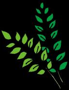 その他の持ち出し禁止の植物
