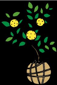 柑橘類の苗木