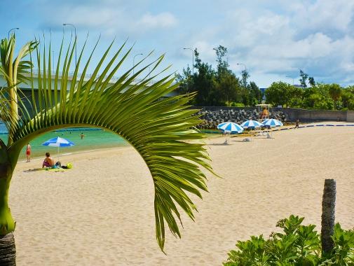 木陰から砂浜を見る