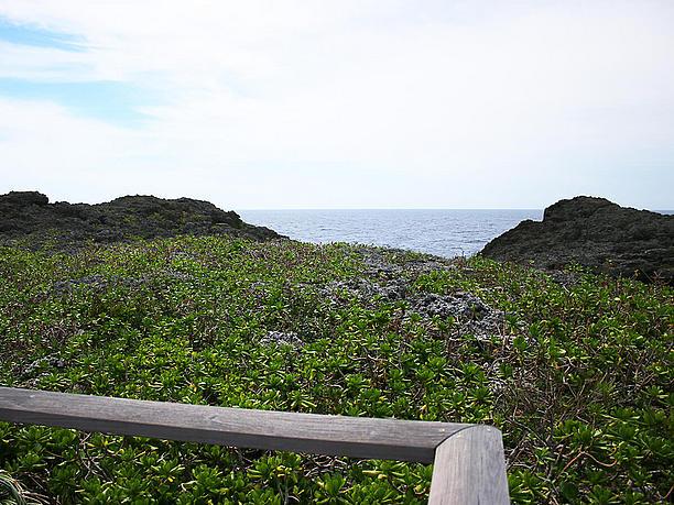 紺碧の海の水平線を眺める