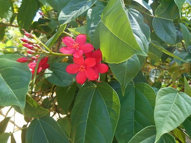 宮古島市熱帯植物園で季節の花々を楽しみながらの散策