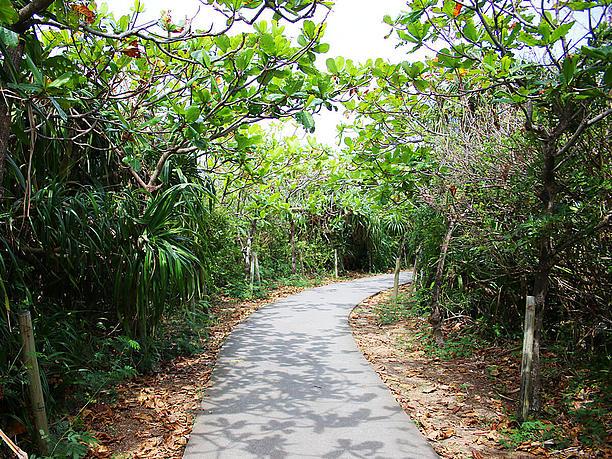 駐車場から池までの散歩道