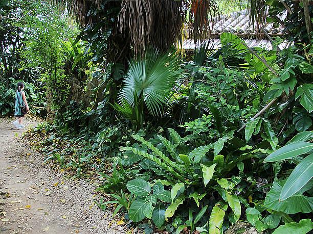 駐車場横からの入口。ジャングルのような雰囲気