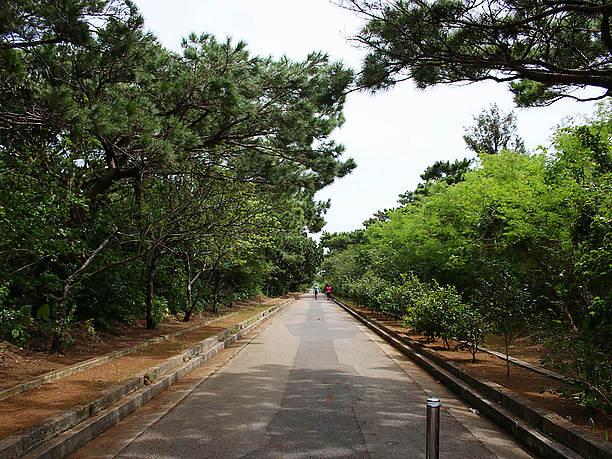 駐車場から展望台への道