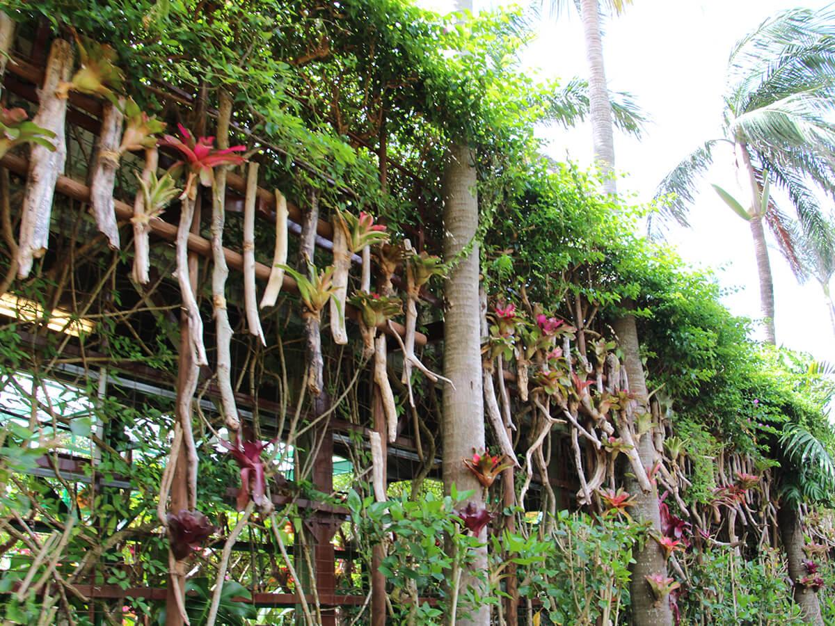 亜熱帯植物の中を通り抜ける