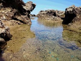 潮だまりを泳ぐ熱帯魚