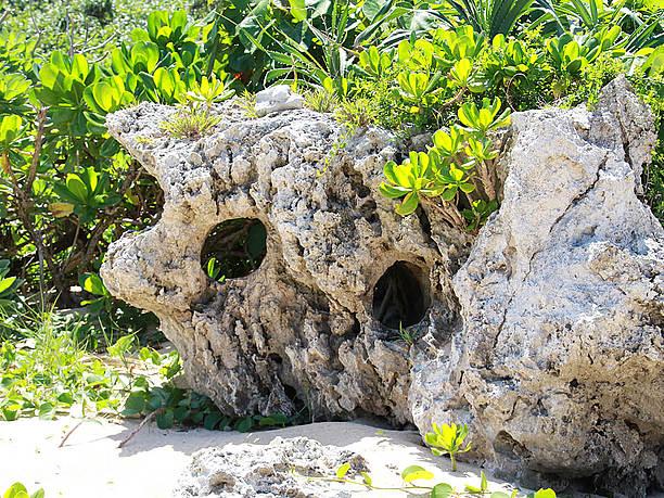 顔に見える岩