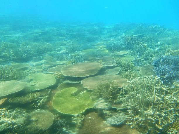 美しい珊瑚の森