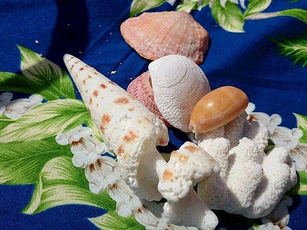 綺麗でおもしろい貝殻
