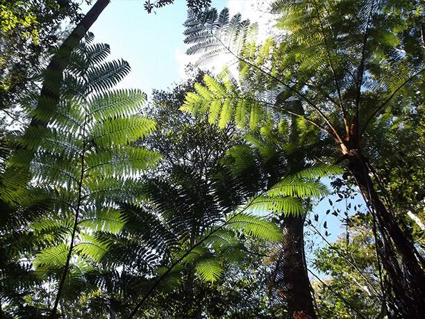 森から見る青空