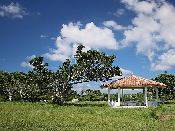 自然に囲まれた緑豊かな公園