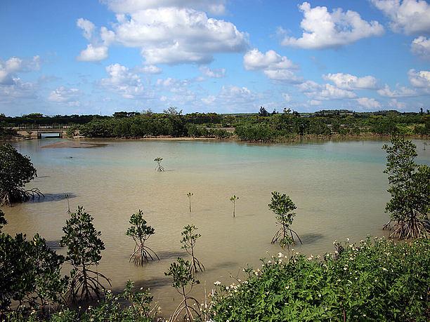 公園の近くにある池