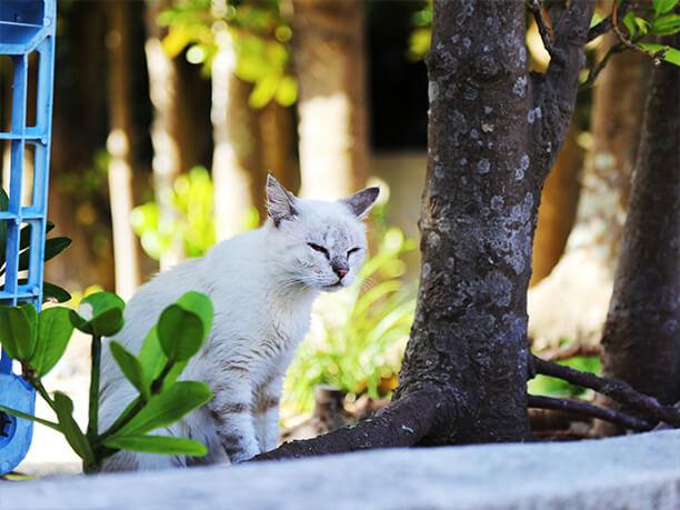 のびのび暮らす猫