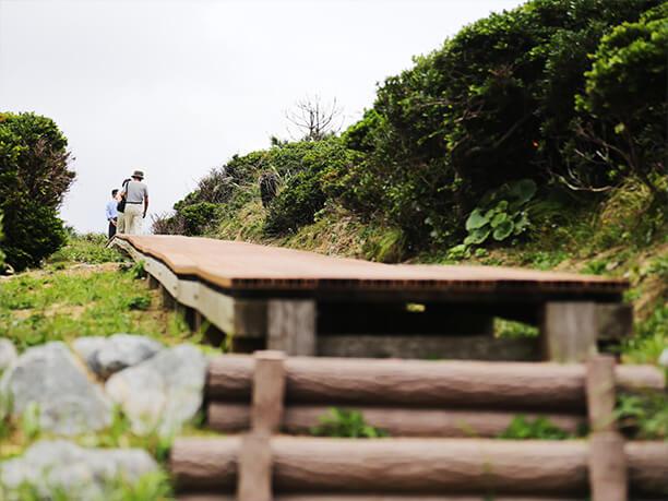 散策道が整備されている高台