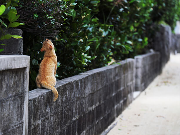 石垣の上にいる野良猫