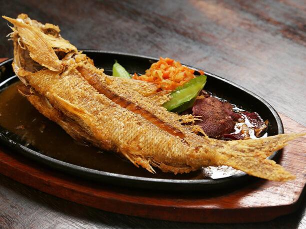 本日獲れたて!!近港からの県産魚一品料理