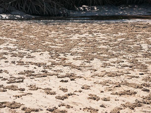 干潟に広がる粒状の泥のかたまり