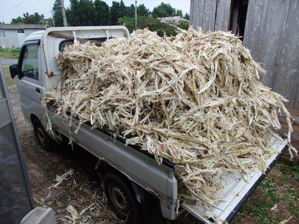 トラックに山積みになったさとうきび