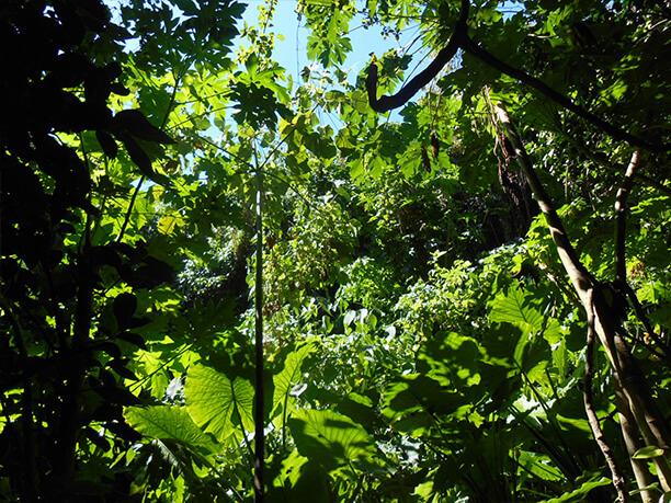 密集して茂る緑