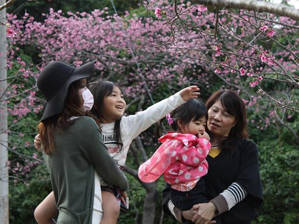 桜の下から花を楽しむ親子