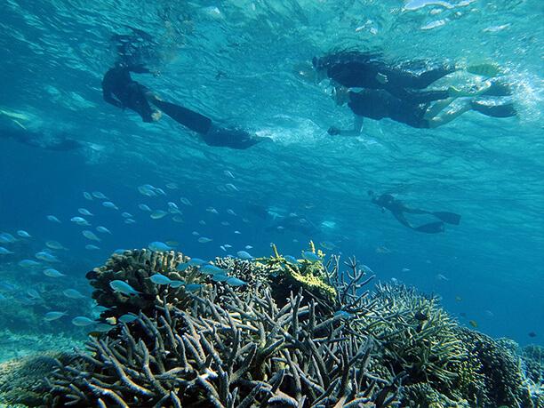 熱帯魚とサンゴとダイバー