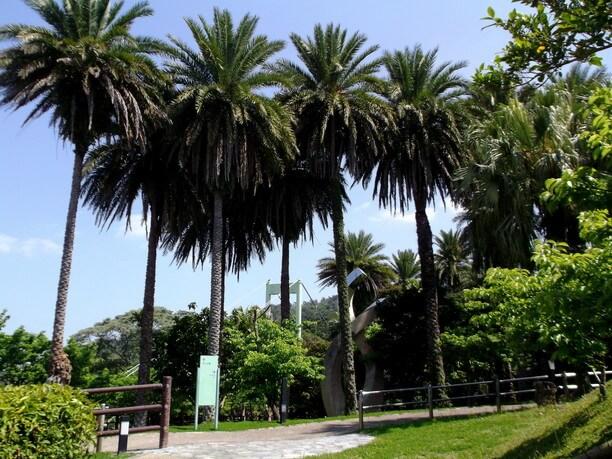 ノッポ椰子の広場