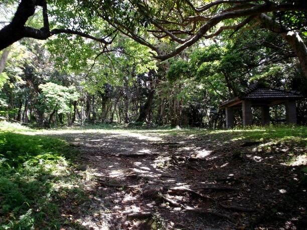 ノッポ椰子の広場駐車場の東側