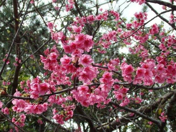 季節ごとに花々が楽しめる公園