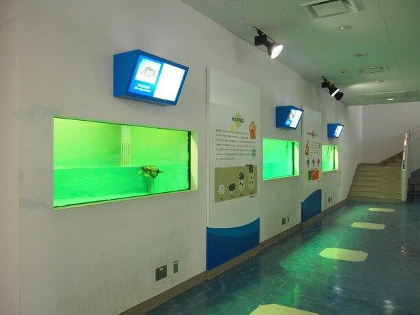 水槽の中には本物のウミガメ