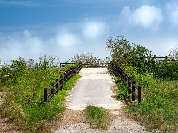 砂浜沿いに散策路