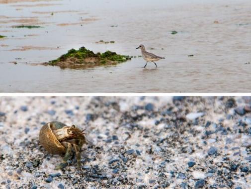 浜辺で生活する生き物たち