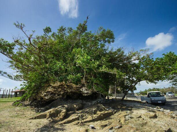 約2000年前の大津波で陸地に打ち上げられた津波大石