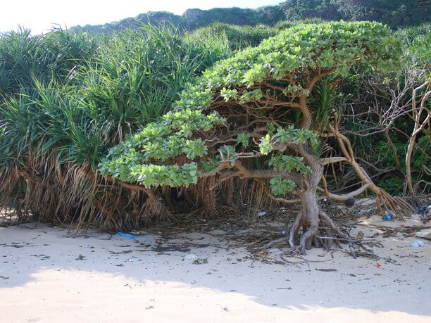 砂浜の日陰
