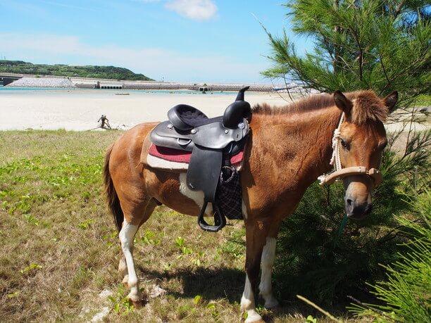 久米島で馬と遊ぶ