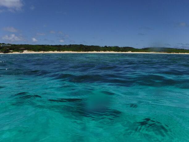 濃厚なサンゴ群