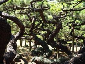 曲がりくねった枝